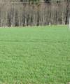 28.6.2018 Dražba lesních pozemků, okres Pelhřimov. Vyvolávací cena 6.534 Kč.