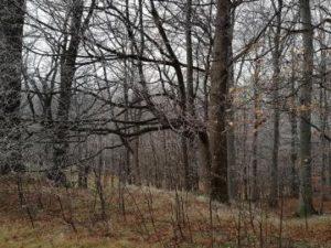 15.03.2019  Dražba Pozemky - 1/3 podíl na pozemcích LV 348 v Malenovicích na Frýdecko-Místecku. Tato nemovitost leží v okrese Frýdek-Místek. Vyvolávací cena 333 333 Kč, (ID: 417025)