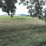 Nemovitost z insolvenčního rejstříku (Zemědělský pozemek). Kč, ➡️ ID673710